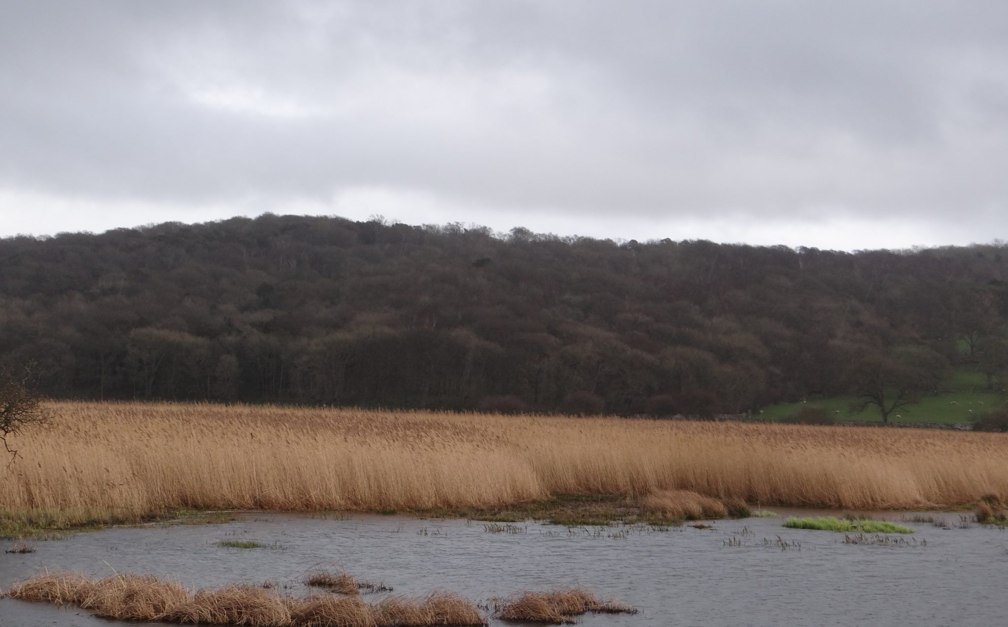 Leighton Moss Bird Watching