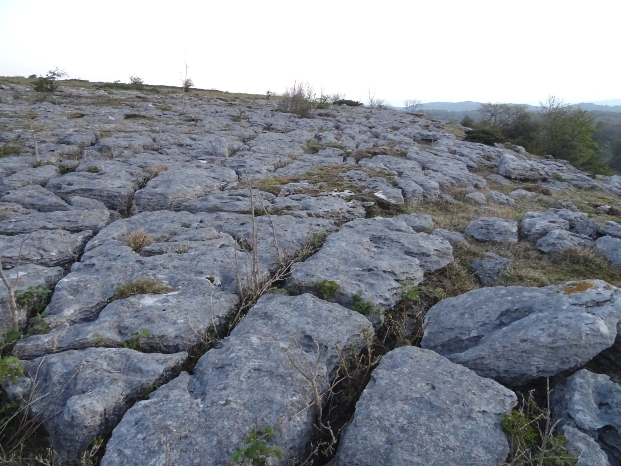 Limestone-Pavement-a Blog
