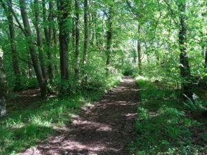 Walk in Cumbria's Woodland
